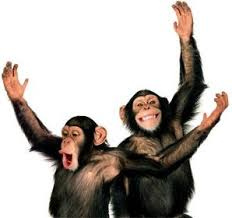 chimps laughing 2